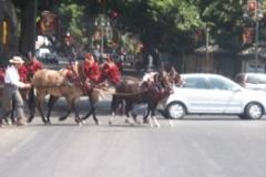 barcelona_horses