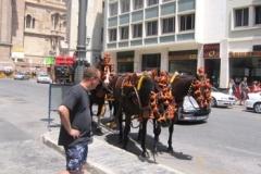 mark_horses_2