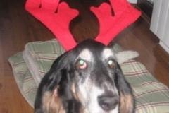 hound_deer_stare