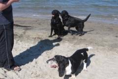3_hounds