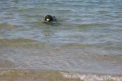 lola_swim_ball