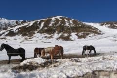 khutai_horses1