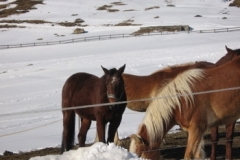 khutai_horses2