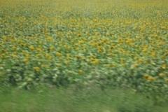 mil_plovdiv_sinflowers_bus