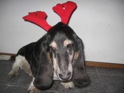 hound-deer-1.jpg