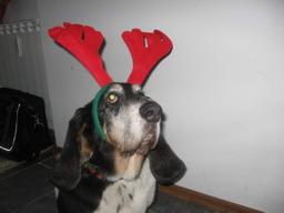 hound-deer.jpg
