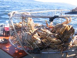 crab-trap.jpg
