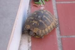 croatia_dubrovnik_turtles