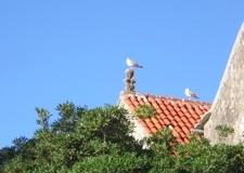 croatia_korcula_seagull