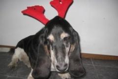 hound_deer_1
