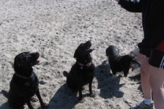 3_hounds2