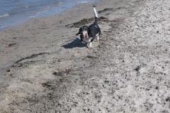 sep_beach_run
