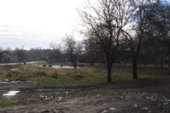 zavet_road_sheep