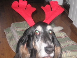 hound-deer-stare.jpg