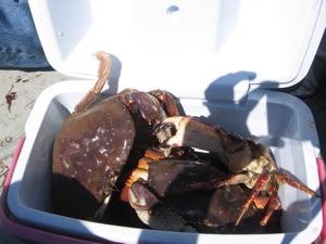 crab-ice-chest.jpg
